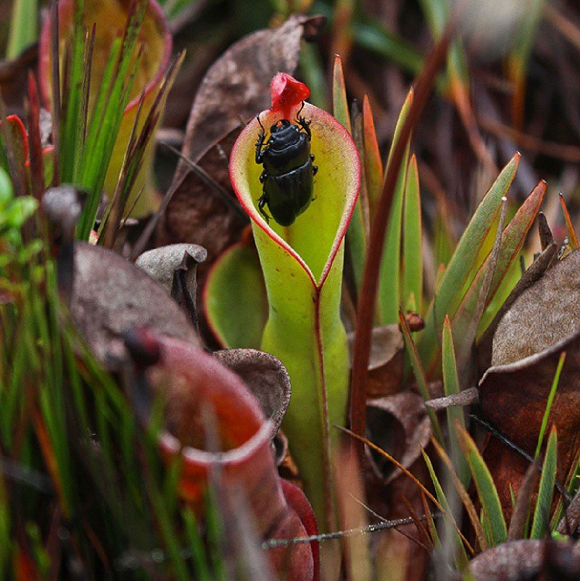 Prehistoric nature in the Roraima