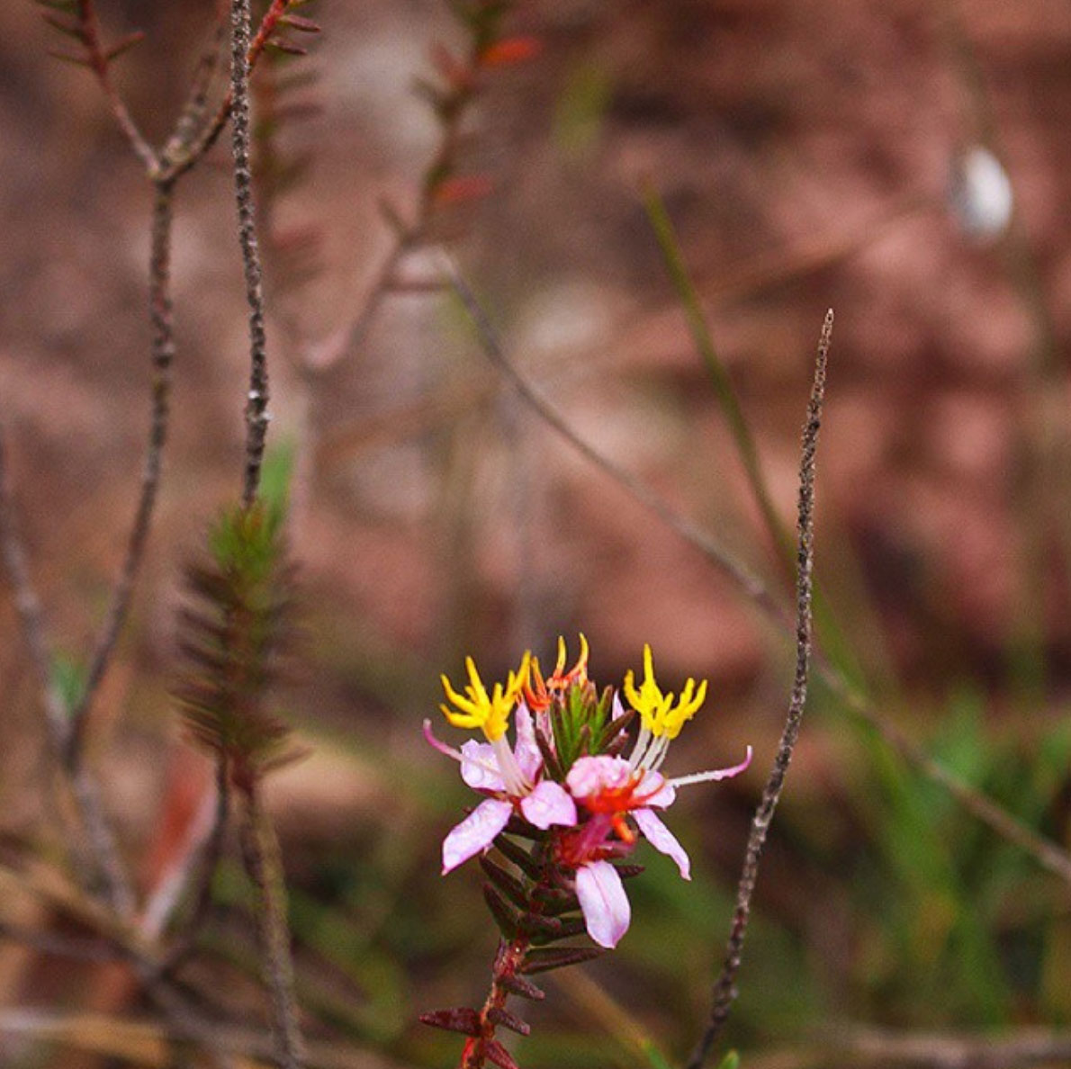 Nature in the Roraima