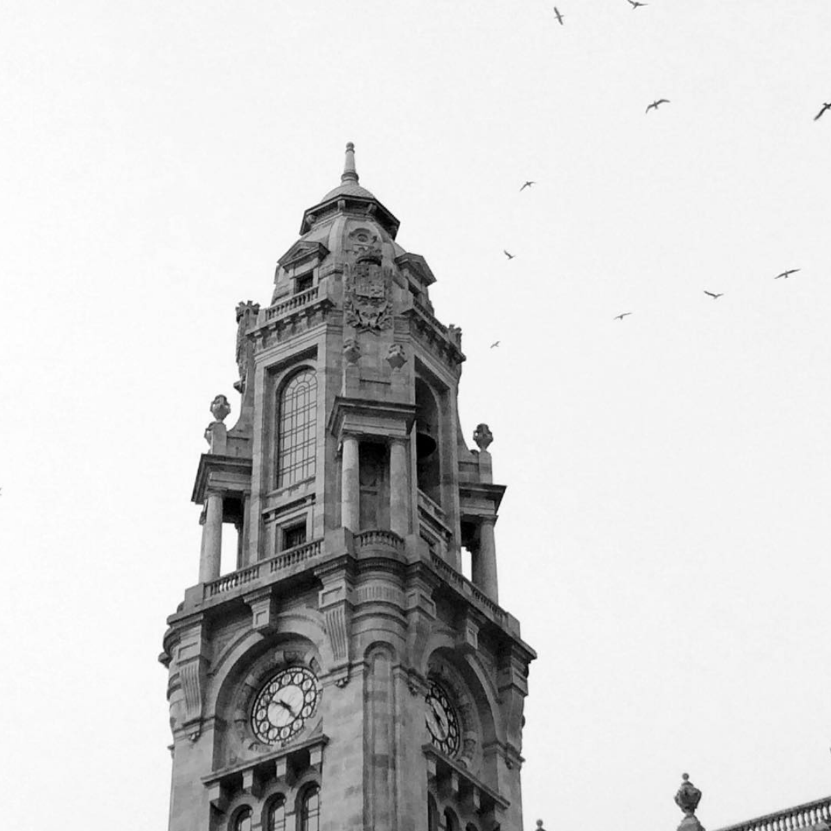 Torre dos clerigos with birds flying in Porto, Portugal