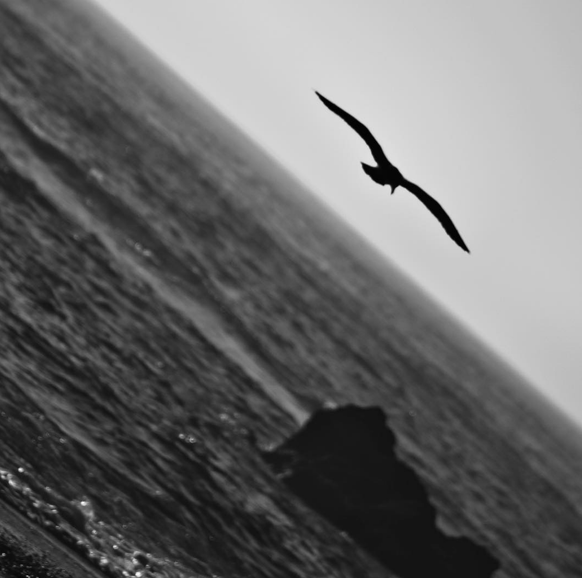 Seagull flying over the waters of the Atlantic Ocean