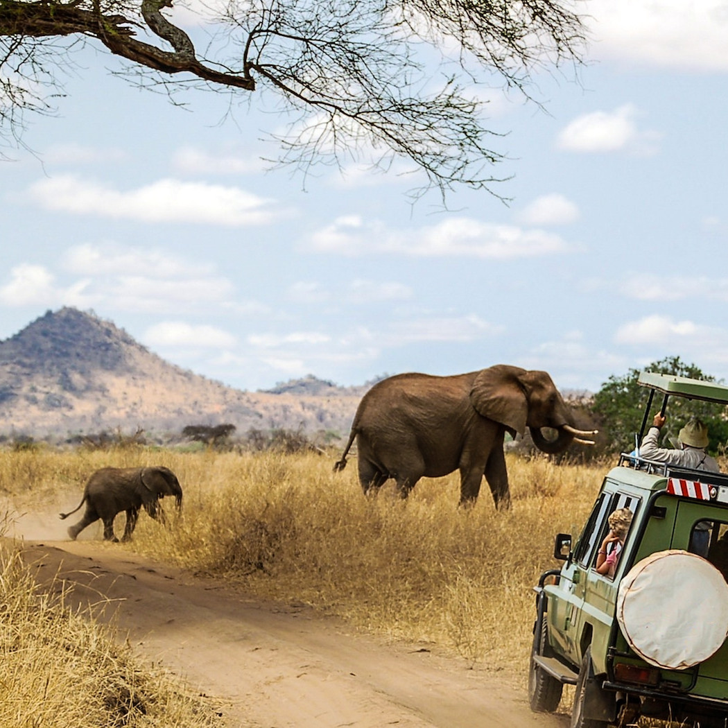 African safari Africa travel Guide She is Wanderlust
