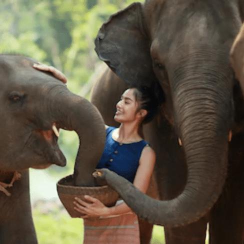 Meeting elephants in asia