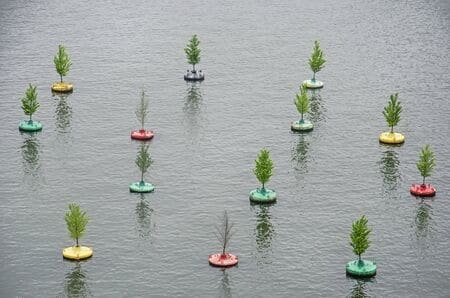 Floating forest in summertime
