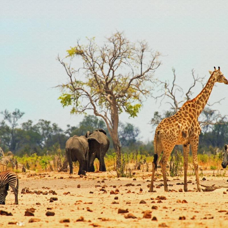 Hwanger National Park Zimbabwe