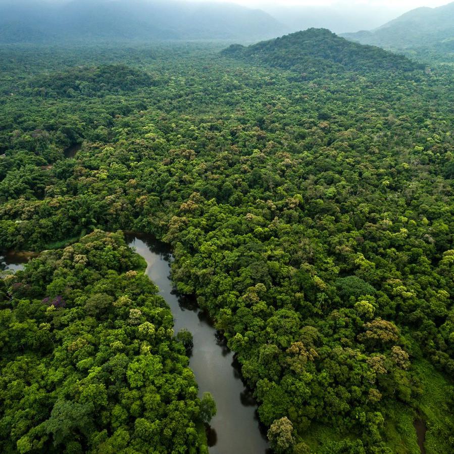 Amazon Jungle equador