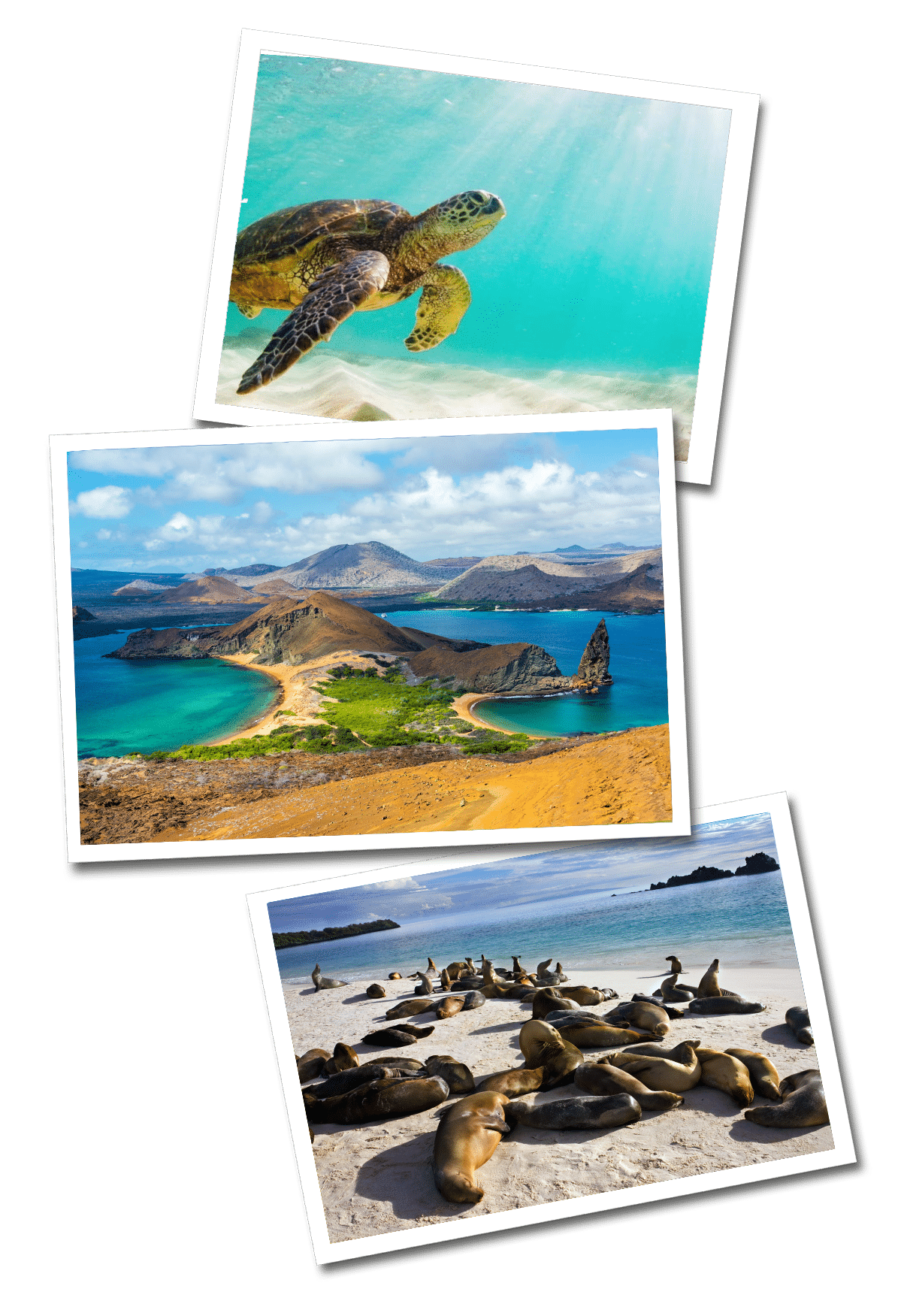 Galapagos postcards