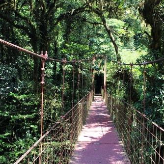 Monteverde biological reserve costa rica