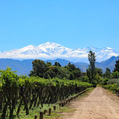 Wineries in Mendoza, Argentina