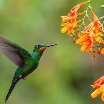 Birdwatching botswana