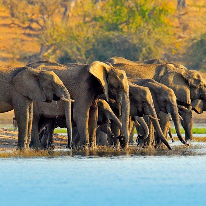 Chobe NAtional Park botswana she is wanderlust