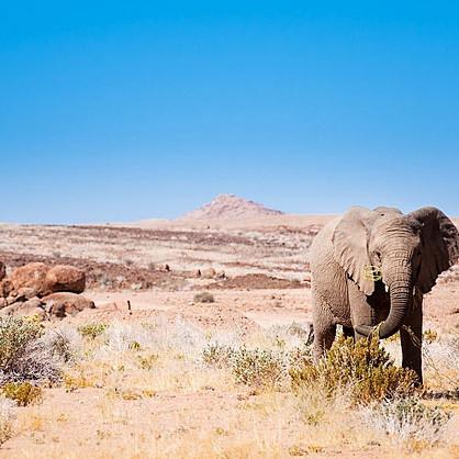 Elephants in Damaraland Namibia