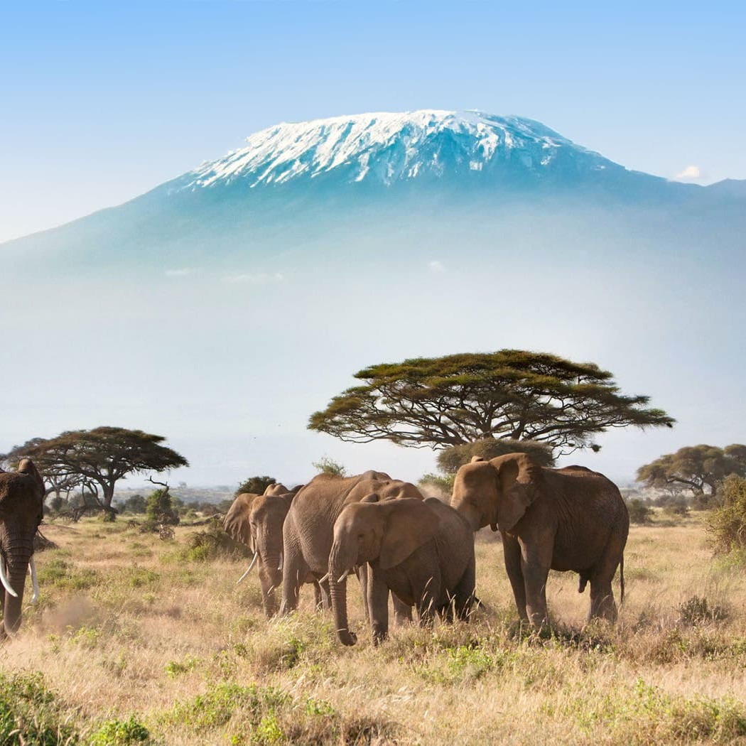 Mount Kilimanjaro South Africa Travel Guide Tanzania