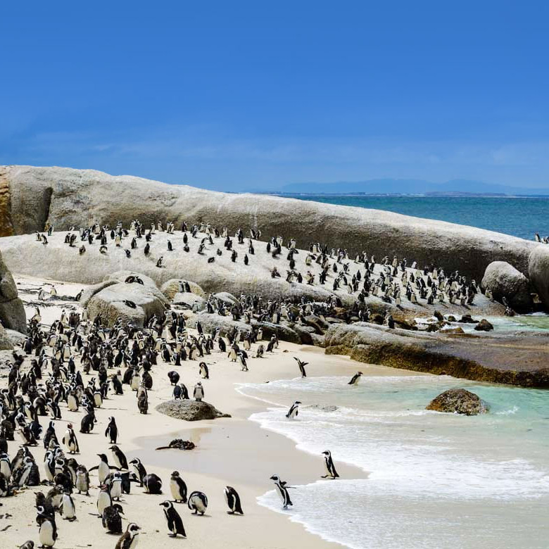 Penguins boulder beach south africa