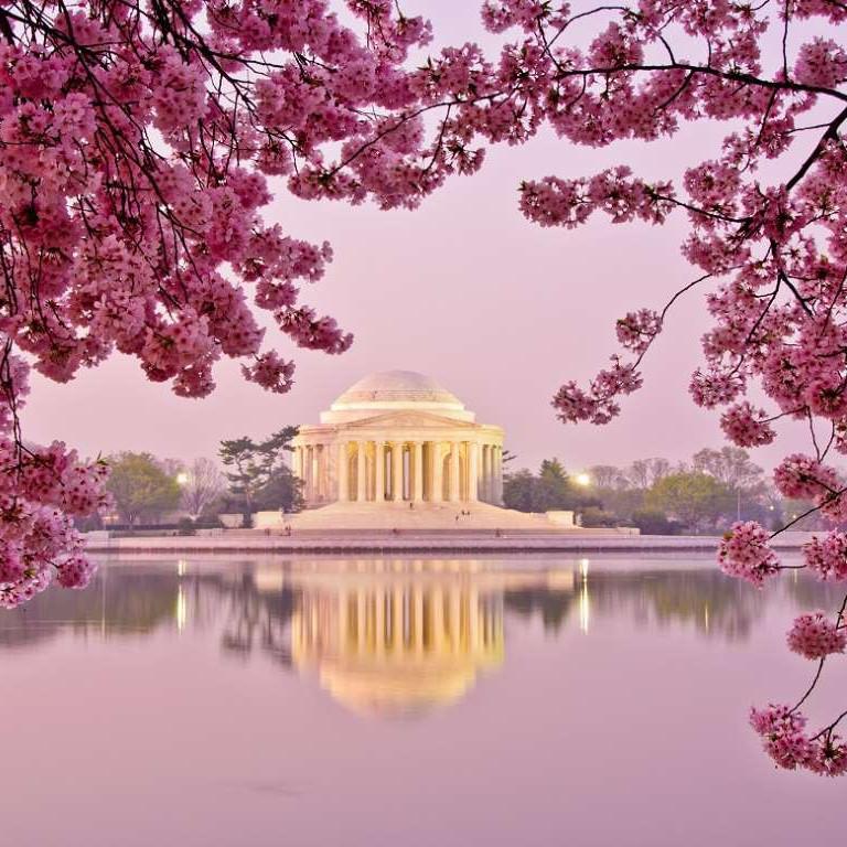 South Korea cherry blossom festival