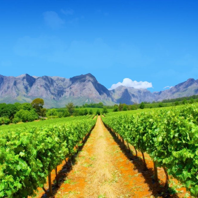 Wineries Cape Town South Africa