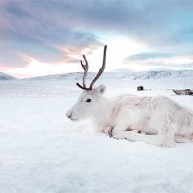 endangered wildlife siberia