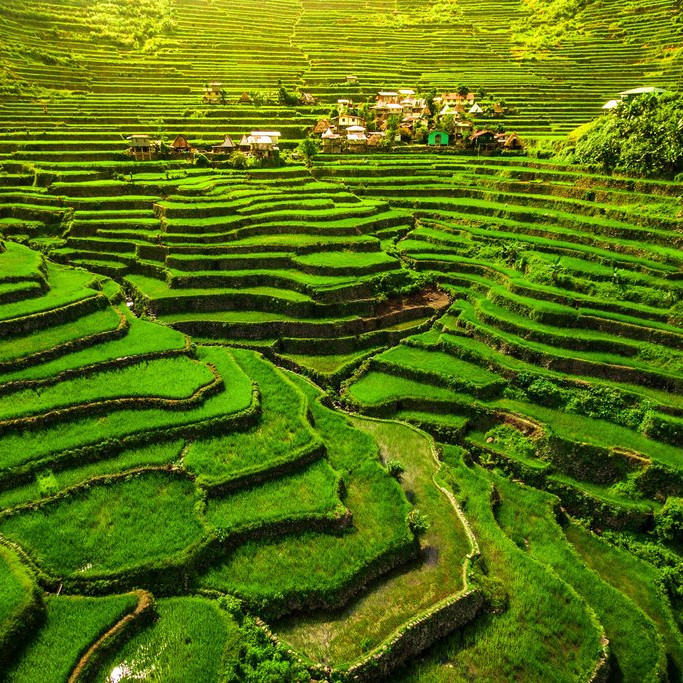 rice terraces of Banaue