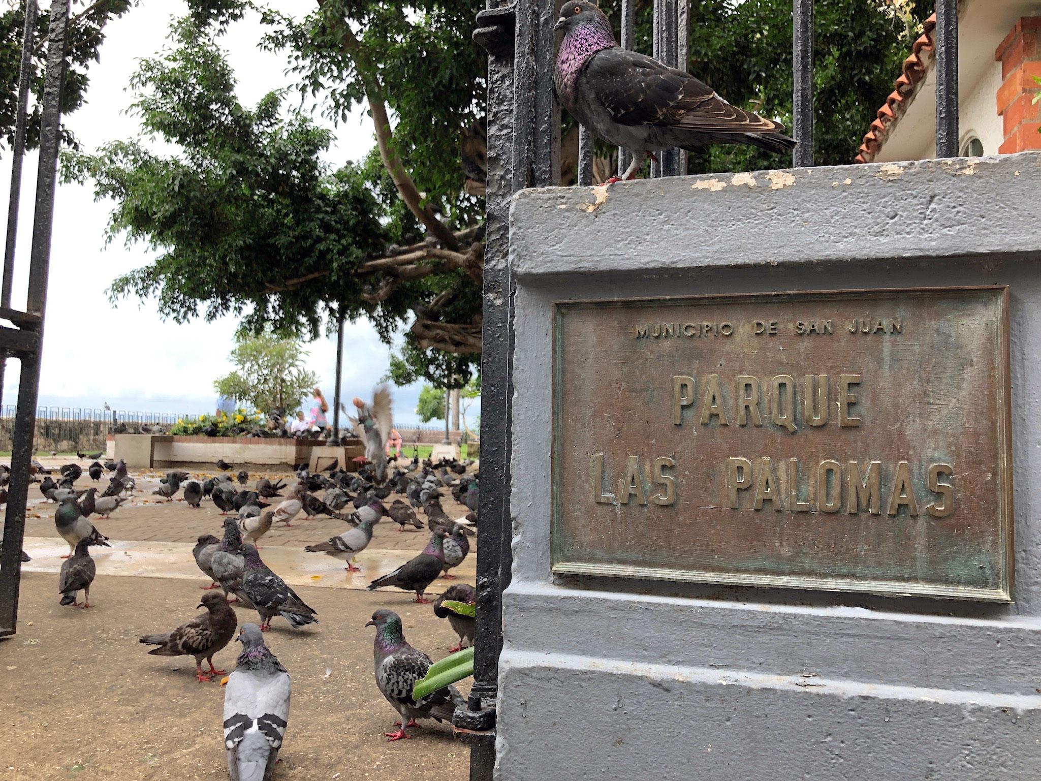 Parque las palomas san juan